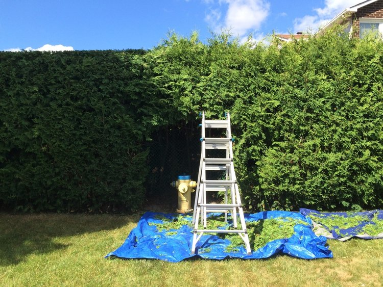 We offer Hedge Trimming Services at a fair price