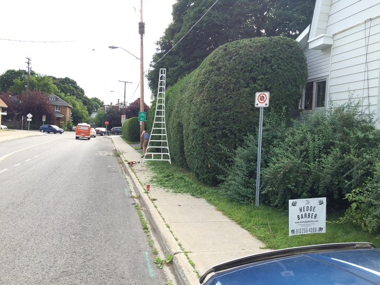 The Hedge Barber offers Hedge Renovation services in Ottawa to help revitalize the shape of your hedges