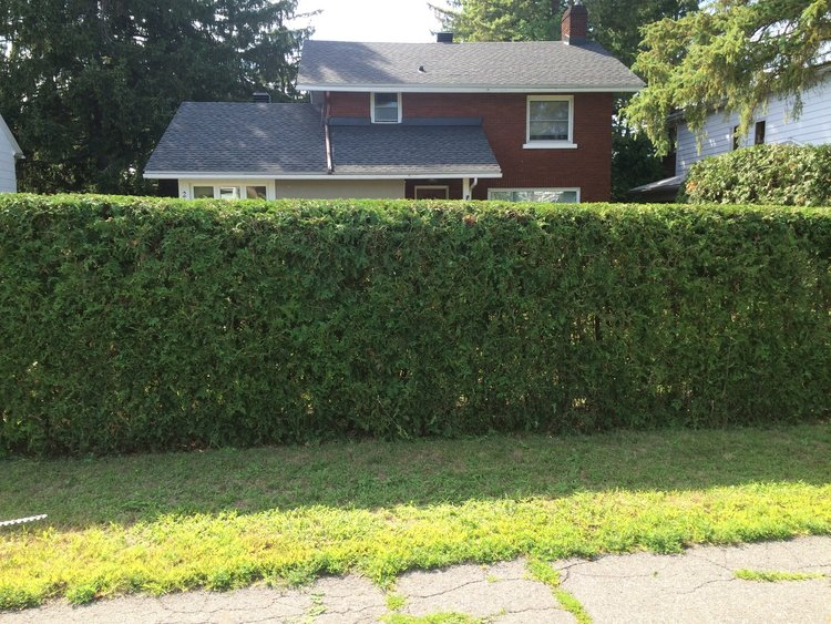 The Hedge Barber offers Hedge Renovation to help revitalize the shape of your hedges