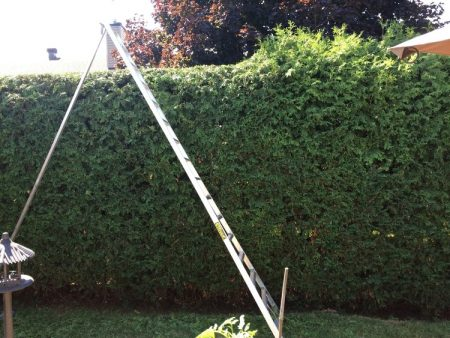 The Hedge Barber offers Hedge Removal Services and will take care of the waste